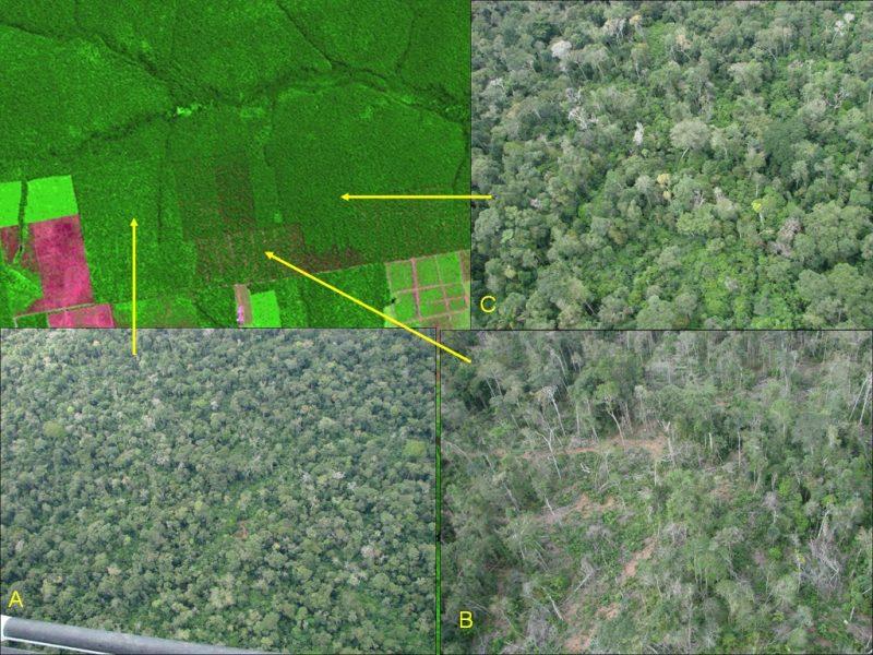 Com menos chuvas, rios mais baixos e mortalidade de árvores, Carlos Nobre prevê Amazônia se tornando cerrado