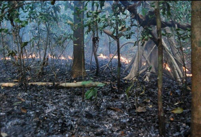 Erika Berenguer: Incêndios na floresta amazônica não ocorrem de maneira natural; é preciso que alguém taque o fogo