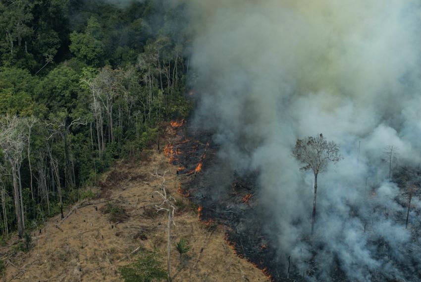 Boiada de Salles: governo Bolsonaro repete método do coronavírus, para mascarar fracasso no combate aos crimes ambientais