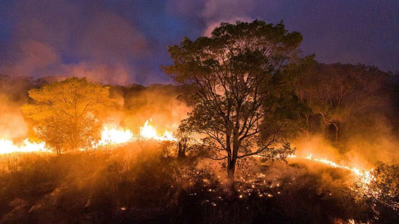 Rogério Correia: Bolsonaro esconde da ONU que liberou plantio de cana no Pantanal, facilitando grandes incêndios