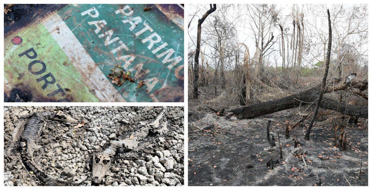 """Queimadas transformam Pantanal em  cemitério: """"Em 40 anos de pesquisa nunca vi tantos animais mortos"""", diz cientista da Fiocruz; fotos"""