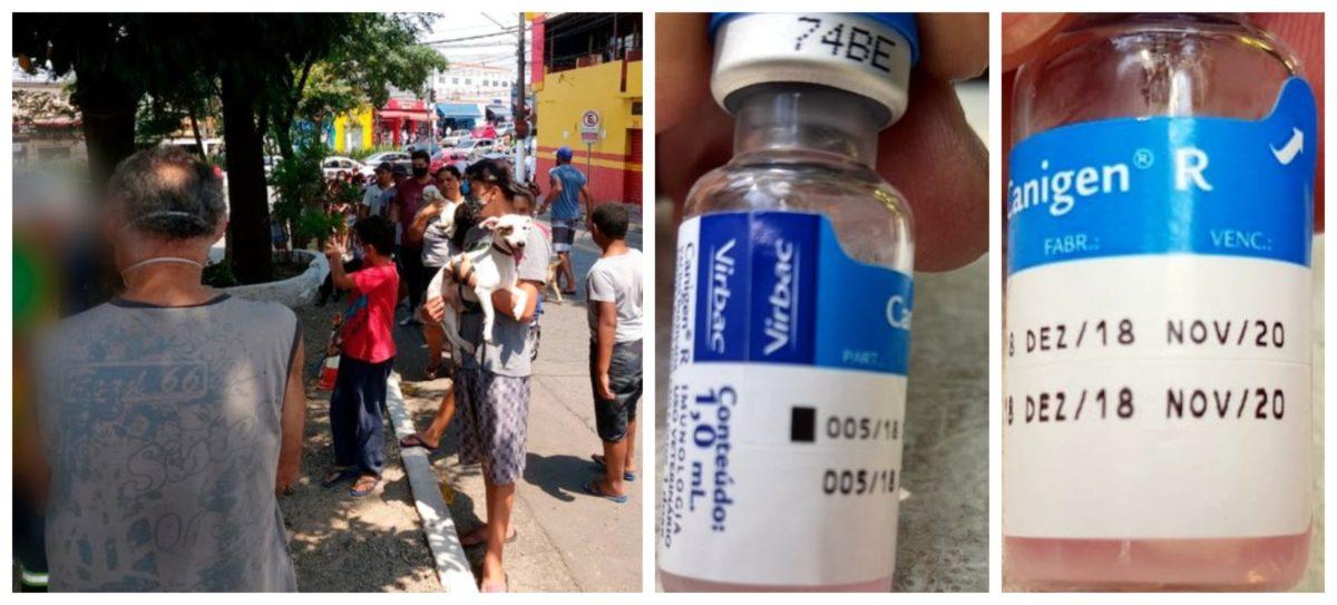 Sindicato denuncia: Covas usa vacinas prestes a vencer em campanha contra a raiva em cães e gatos
