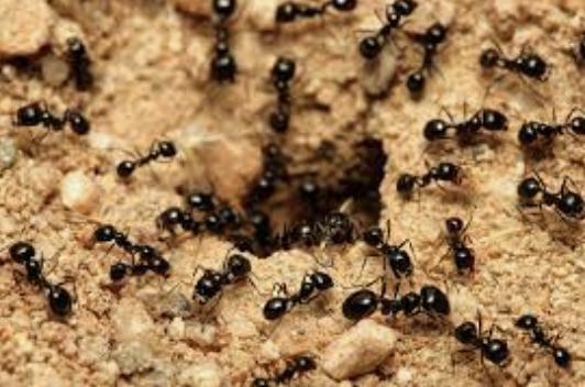 Onyx diz que formigas transmitem o vírus da covid, por isso lockdown não é eficaz